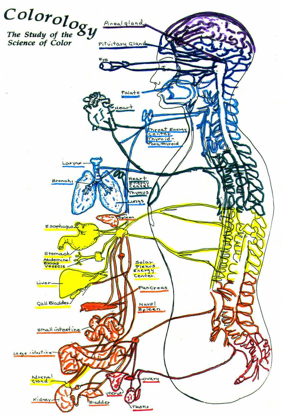 Colorology caryl dennis color therapy life colors chakras bodyposter geenschuldenfo Images
